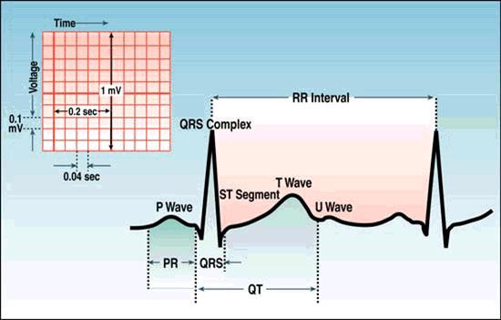 بخش های مختلف ECG